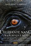 L'Elefante Nano Tra Scienza E Mito